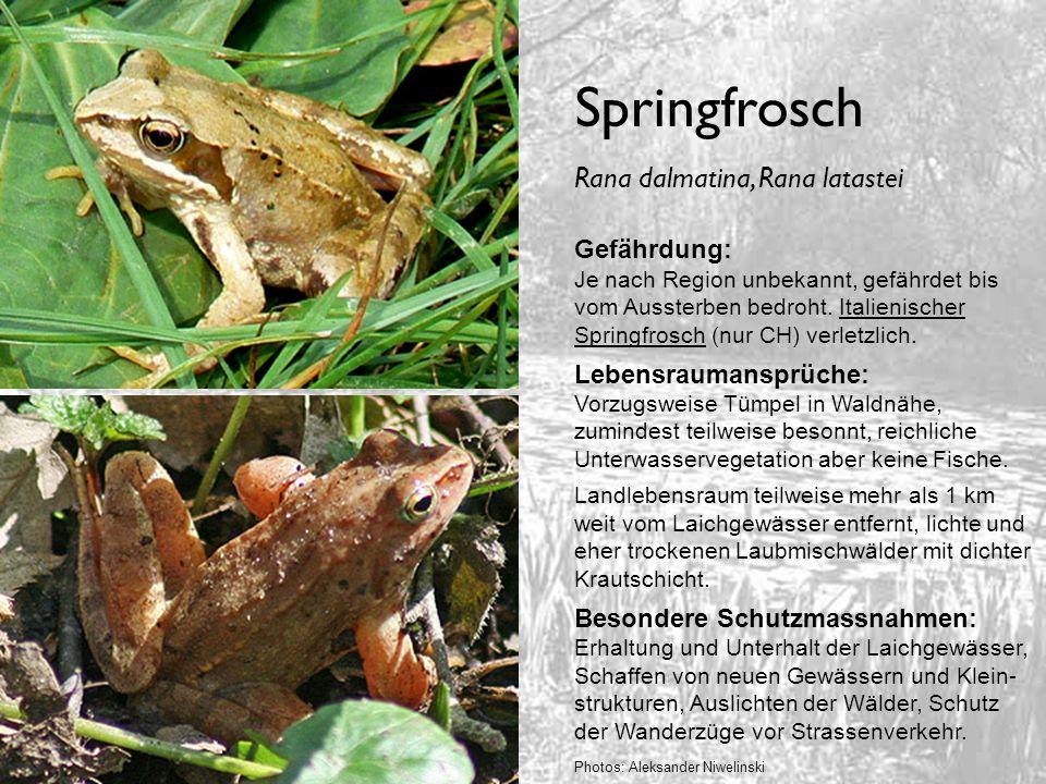Springfrosch Gefährdung: Je nach Region unbekannt, gefährdet bis vom Aussterben bedroht. Italienischer Springfrosch (nur CH) verletzlich. Lebensrauman