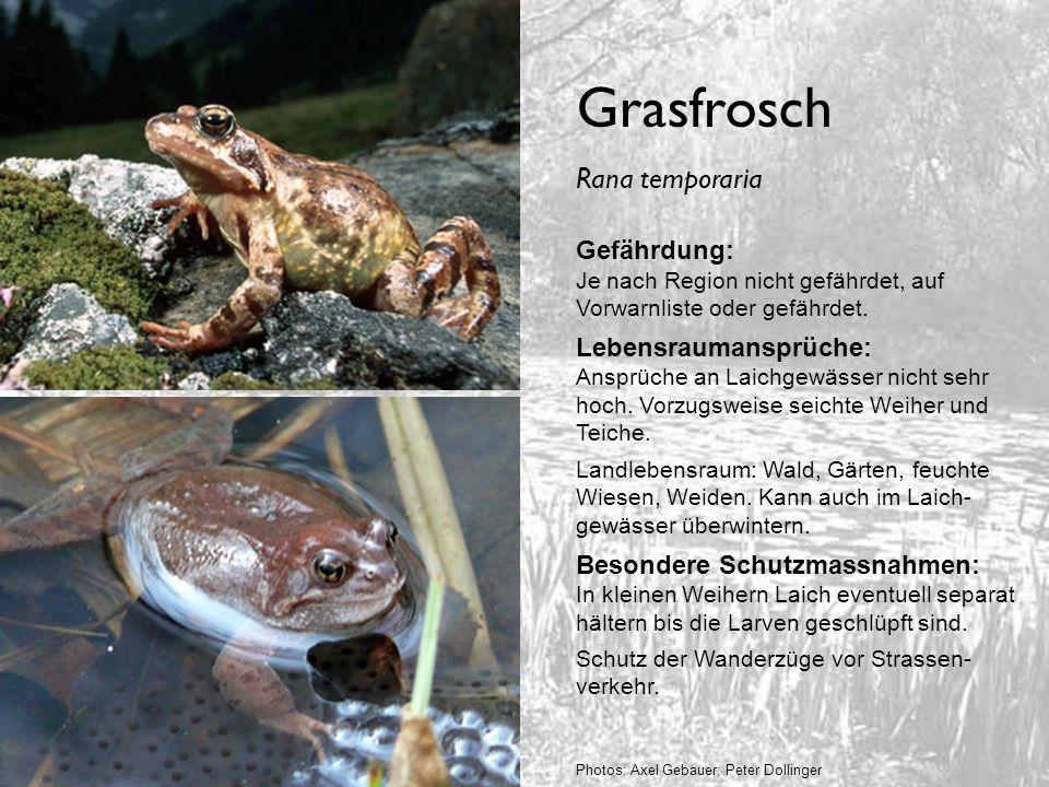 Grasfrosch Gefährdung: Je nach Region nicht gefährdet, auf Vorwarnliste oder gefährdet. Lebensraumansprüche: Ansprüche an Laichgewässer nicht sehr hoc