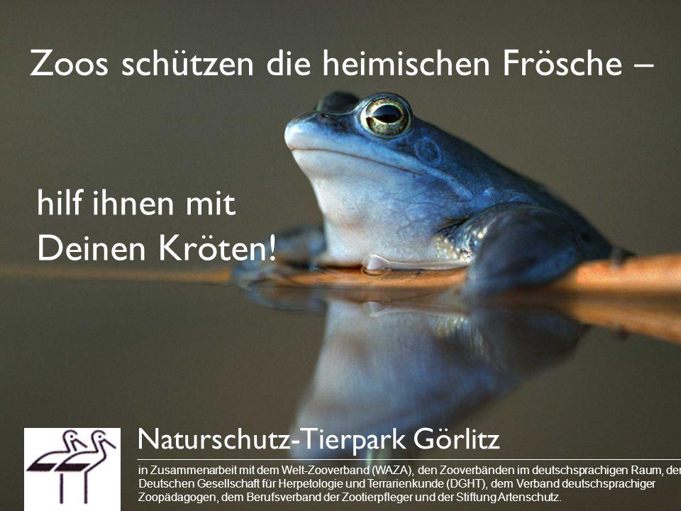 Zoos schützen die heimischen Frösche – Naturschutz-Tierpark Görlitz in Zusammenarbeit mit dem Welt-Zooverband (WAZA), den Zooverbänden im deutschsprac