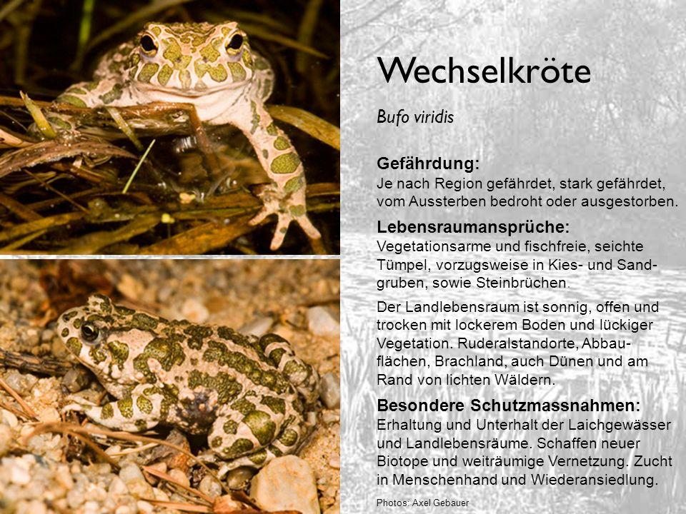Unken Gefährdung: Rotbauchunke (nur D) je nach Bundesland stark gefährdet, vom Aussterben bedroht oder ausgestorben.