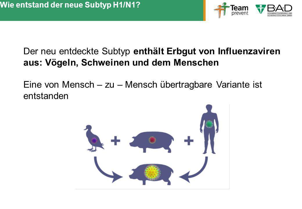 Wie entstand der neue Subtyp H1/N1? Der neu entdeckte Subtyp enthält Erbgut von Influenzaviren aus: Vögeln, Schweinen und dem Menschen Eine von Mensch