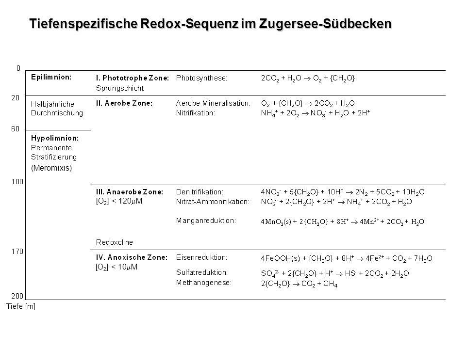 Einfluss der enzymatisch katalysierten Denitrifikation auf die N-Isotopenzusammensetzung im Produkt und im Edukt Transmembrane Diffusion: Enzymkomplexierung: Enzymreaktion: Isotopenfraktionierung
