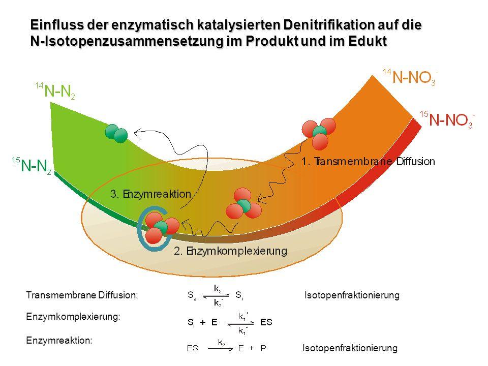 Methodik: Aufbereitung der Wasserproben Für die 15 N-NO 3 – –Messungen: 1.Abfiltrieren der Biomasse 2.Aufkonzentrieren des Nitrats auf einem Ionentauscher 3.Eluieren des am Ionentauscher komplexierten Nitrats mit konzentrierter Salzsäure 4.Neutralisieren der Salpetersäure mit Silberoxid 5.Abfiltrieren des Silberchlorids und Einfüllen der Silbernitratlösung in ein lichtundurchlässiges Fläschchen 6.Gefriertrocknen des Silbernitrats Für die 15 N-N 2 –Messungen: 1.Entnehmen der Wasserprobe aus dem unteren Bereich der Glasflasche 2.Injizieren der Probe in ein mit Helium gefülltes Hermetik-Röhrchen 3.Einstellen des Phasengleichgewichts bei Raumtemperatur.