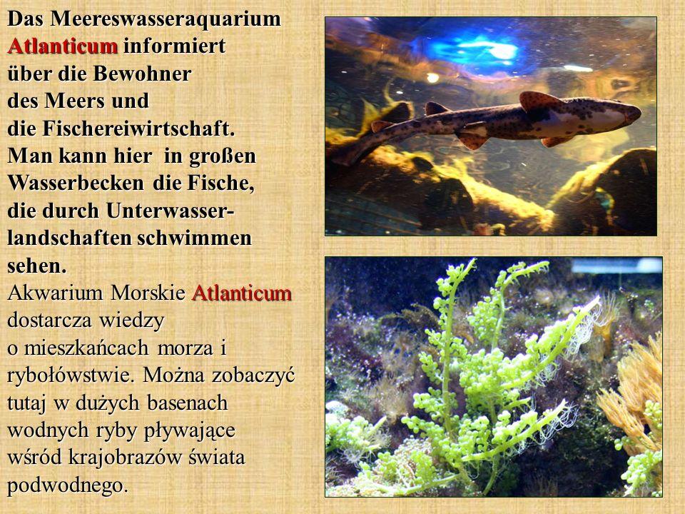 Das Meereswasseraquarium Atlanticum informiert über die Bewohner des Meers und die Fischereiwirtschaft. Man kann hier in großen Wasserbecken die Fisch