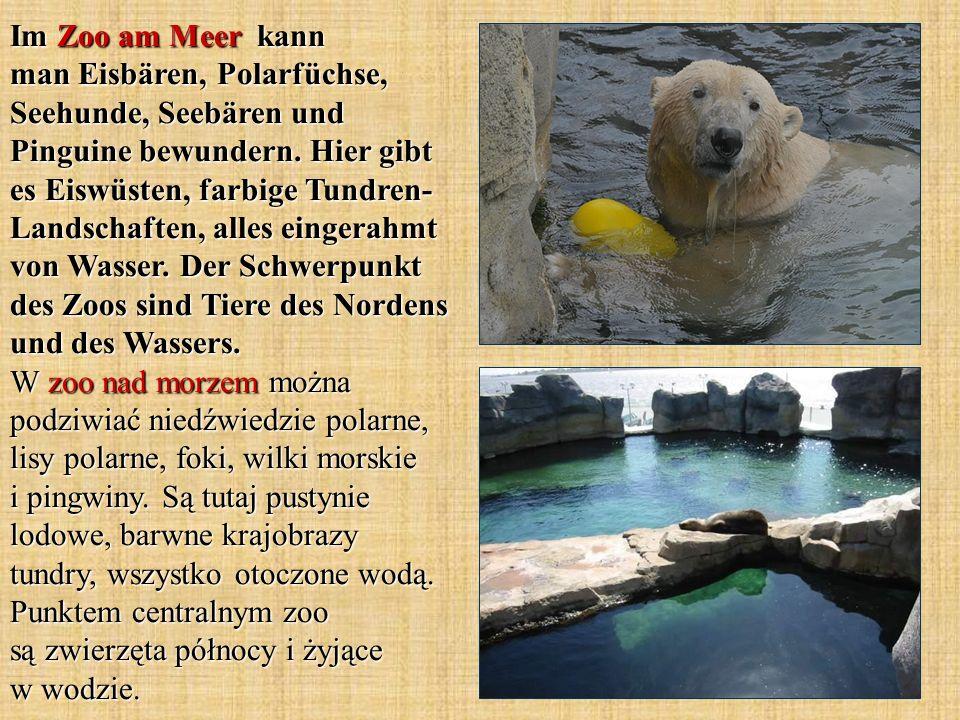 Im Zoo am Meer kann man Eisbären, Polarfüchse, Seehunde, Seebären und Pinguine bewundern. Hier gibt es Eiswüsten, farbige Tundren- Landschaften, alles