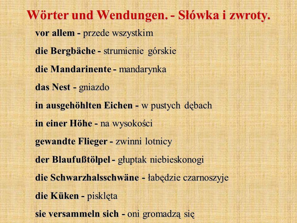 vor allem - przede wszystkim die Bergbäche - strumienie górskie die Mandarinente - mandarynka das Nest - gniazdo in ausgehöhlten Eichen - w pustych dębach in einer Höhe - na wysokości gewandte Flieger - zwinni lotnicy der Blaufußtölpel - głuptak niebieskonogi die Schwarzhalsschwäne - łabędzie czarnoszyje die Küken - pisklęta sie versammeln sich - oni gromadzą się Wörter und Wendungen.