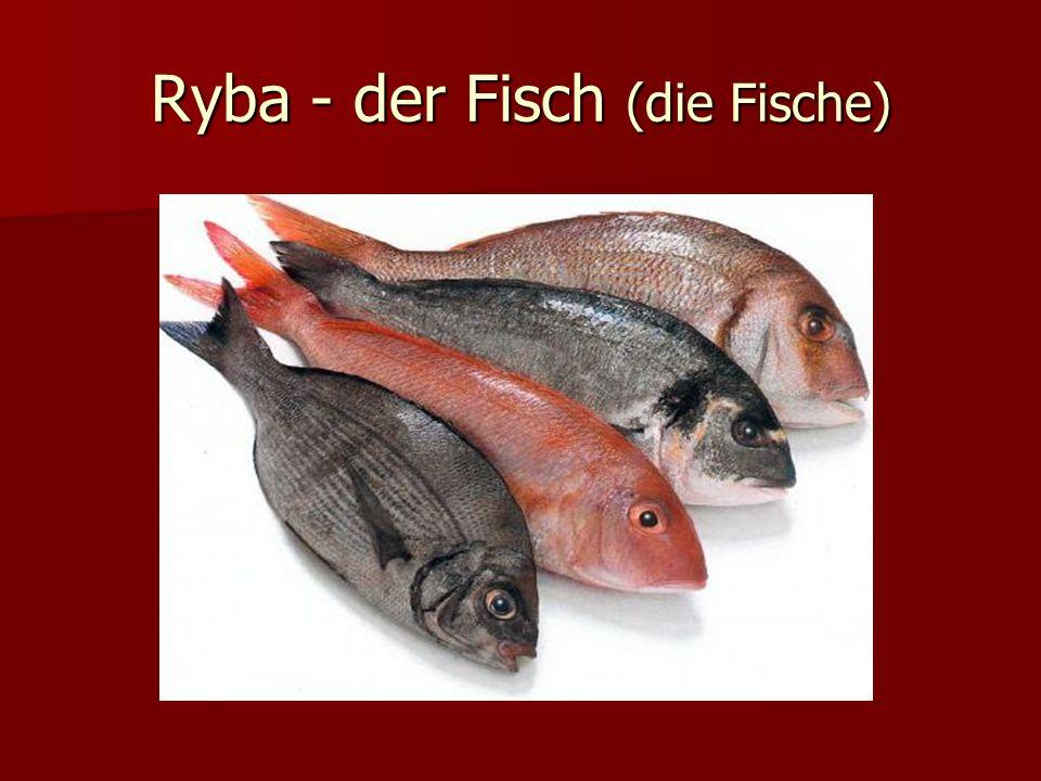 Ryba - der Fisch (die Fische)