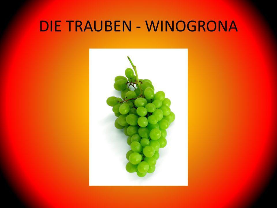 DIE TRAUBEN - WINOGRONA
