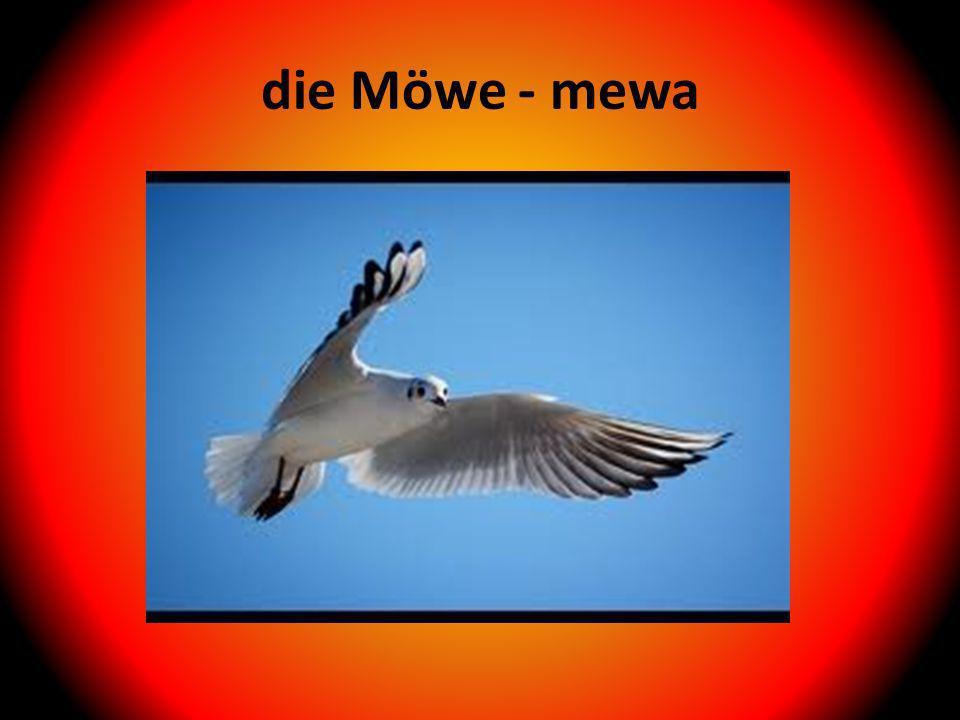 die Möwe - mewa
