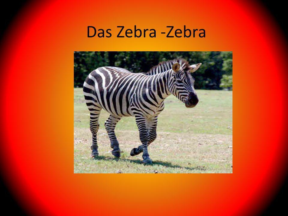 Das Zebra -Zebra