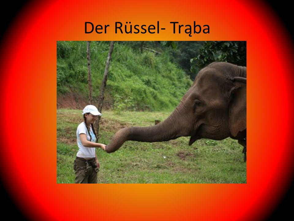 Der Rüssel- Trąba
