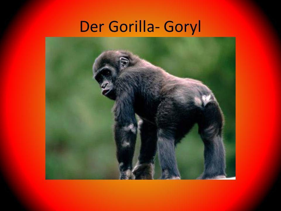 Der Gorilla- Goryl
