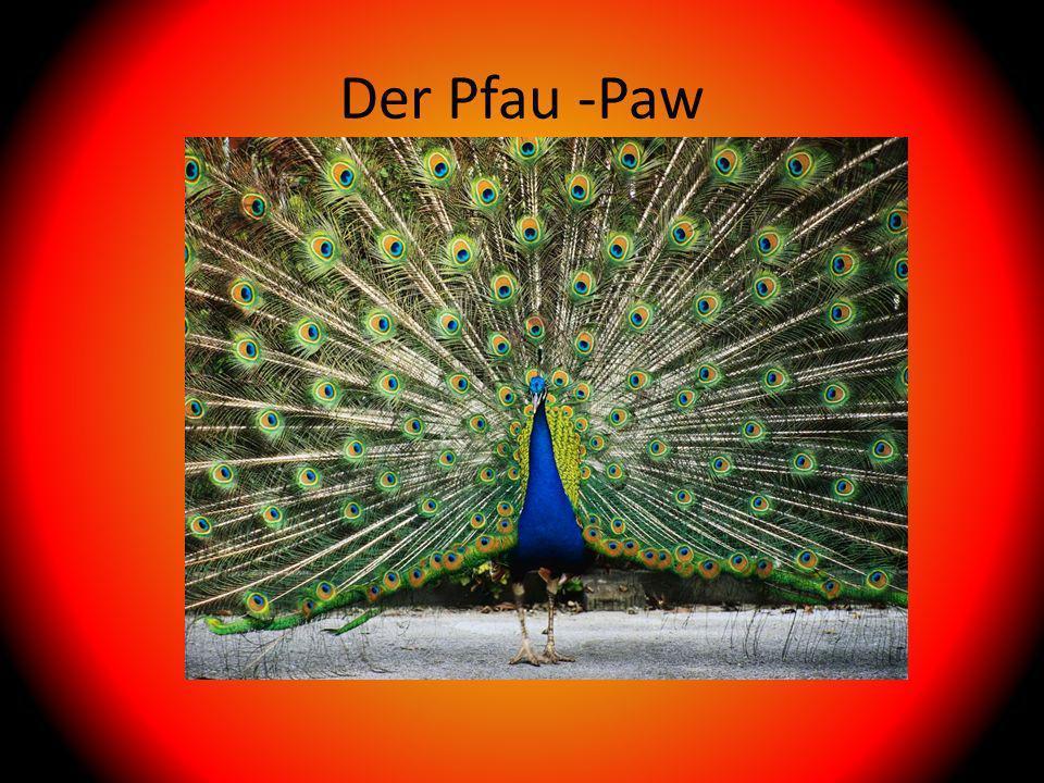 Der Pfau -Paw