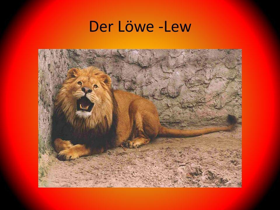 Der Löwe -Lew