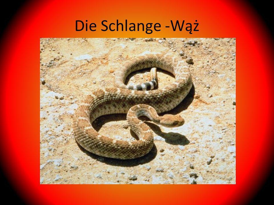 Die Schlange -Wąż