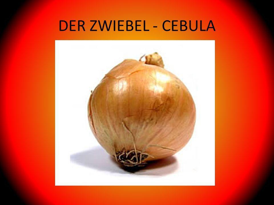 DER ZWIEBEL - CEBULA