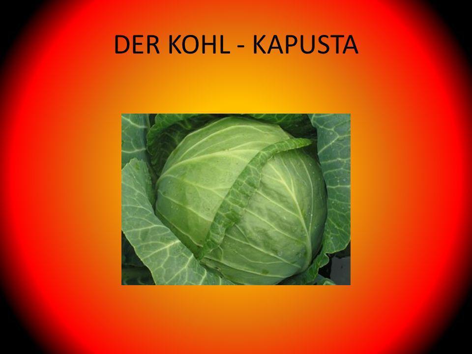 DER KOHL - KAPUSTA