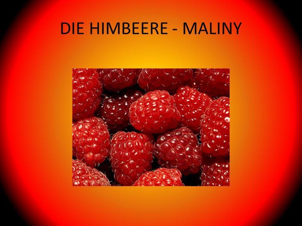 DIE HIMBEERE - MALINY