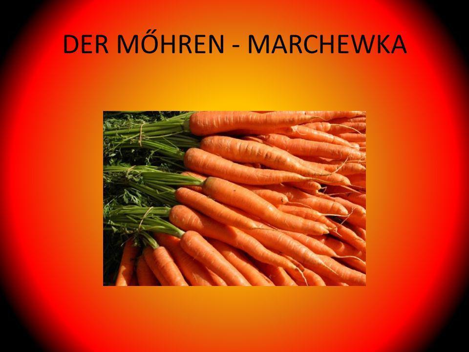 DER MŐHREN - MARCHEWKA