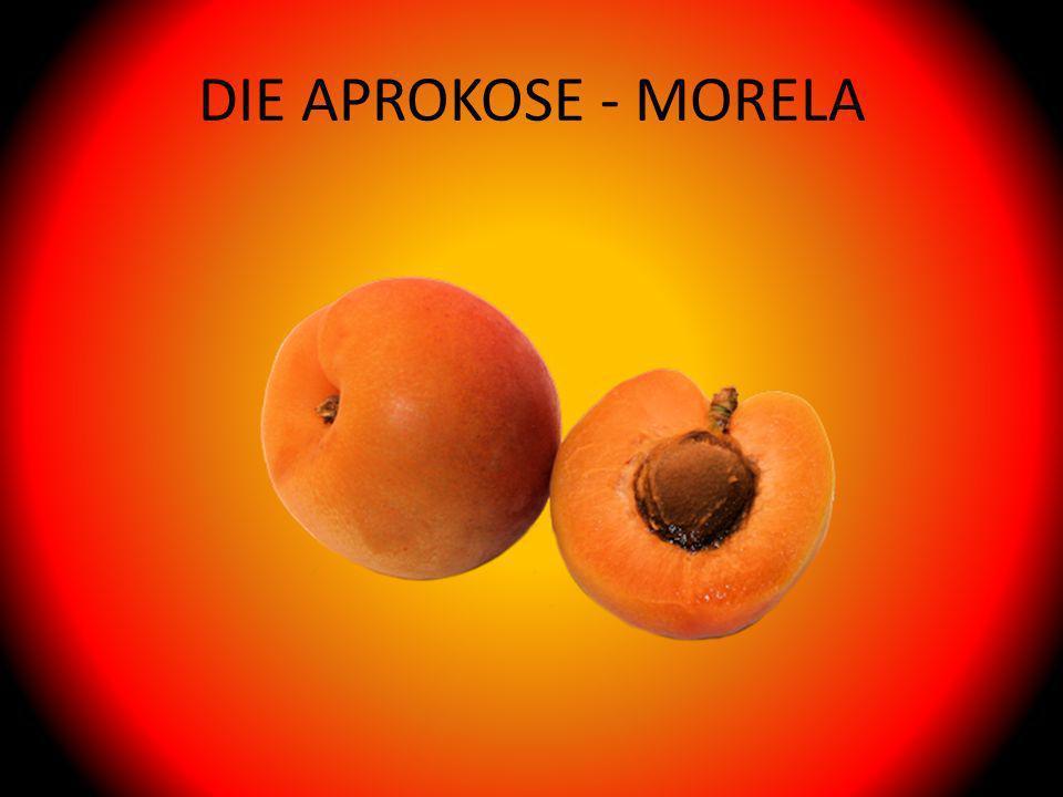 DIE APROKOSE - MORELA