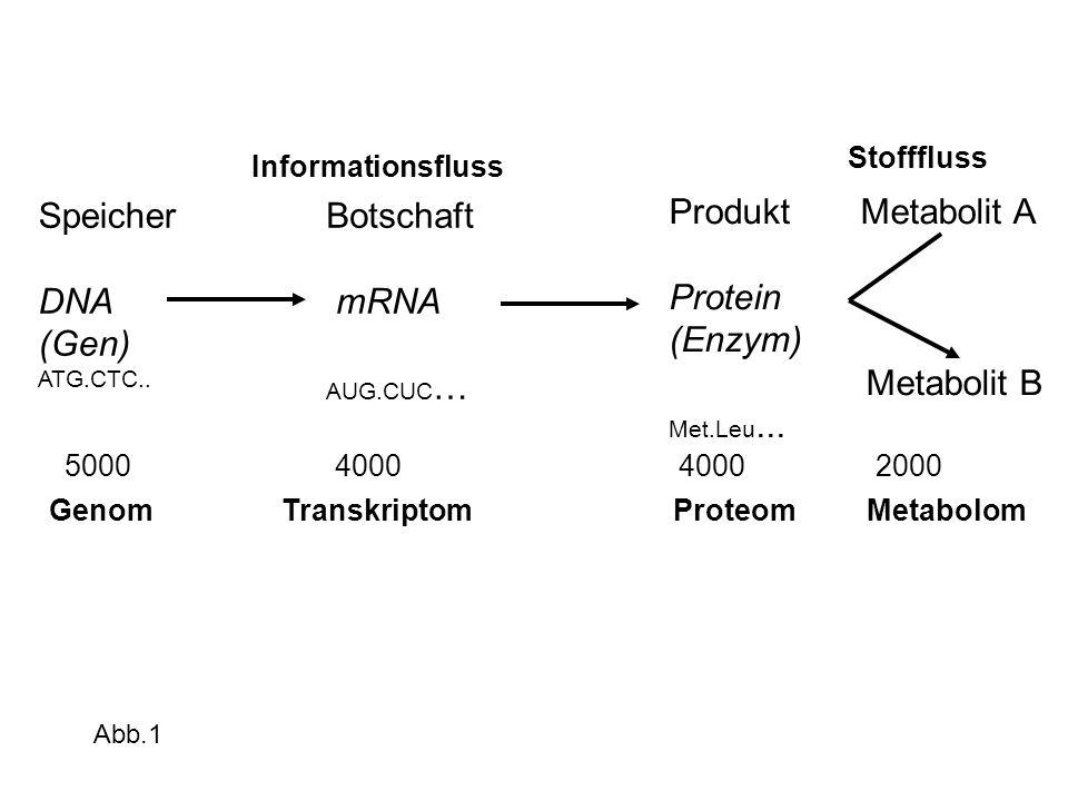 Speicher DNA (Gen) ATG.CTC.. Botschaft mRNA AUG.CUC … Produkt Metabolit A Protein (Enzym) Metabolit B Met.Leu... Informationsfluss Stofffluss 5000 400