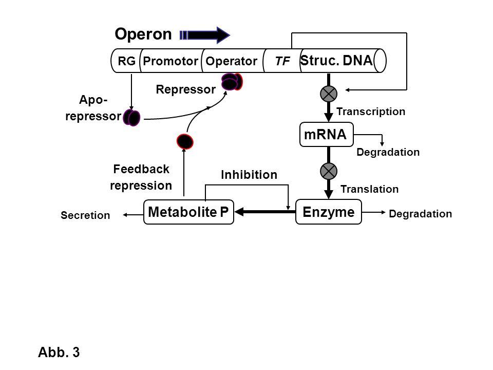 Secretion Degradation RG Promotor Operator TF Struc. DNA mRNA Enzyme Metabolite P Transcription Translation Inhibition Degradation Apo- repressor Repr