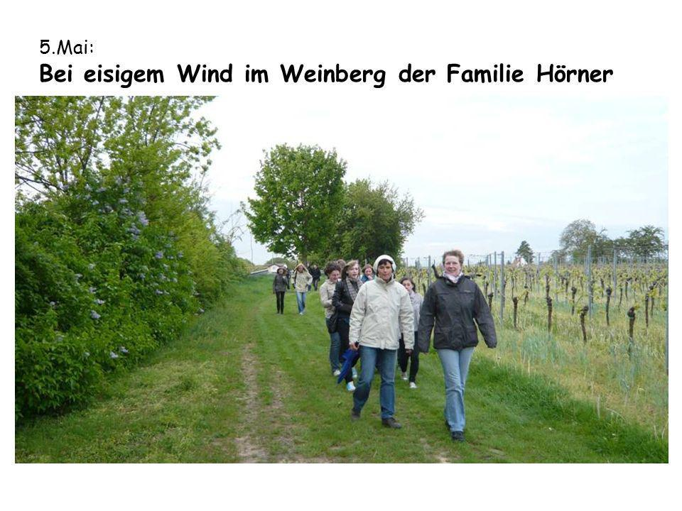 5.Mai: Bei eisigem Wind im Weinberg der Familie Hörner