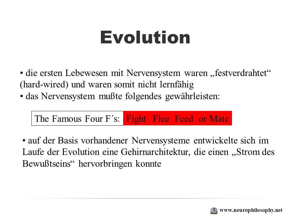 Evolution www.neurophilosophy.net die ersten Lebewesen mit Nervensystem waren festverdrahtet (hard-wired) und waren somit nicht lernfähig das Nervensy