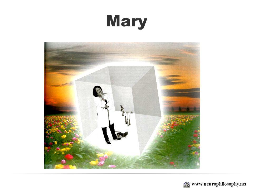 Mary www.neurophilosophy.net