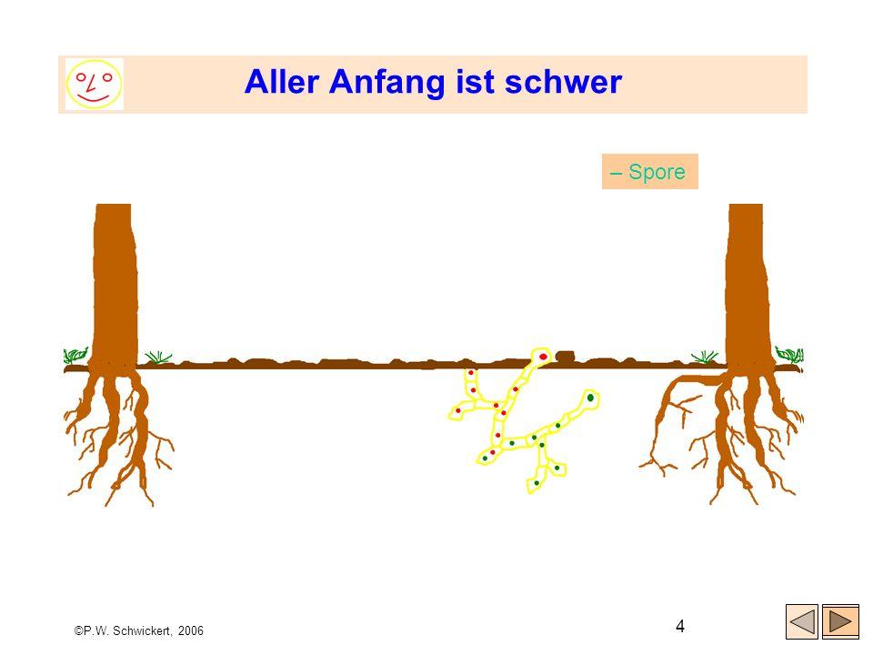 ©P.W. Schwickert, 2006 4 Aller Anfang ist schwer – Spore