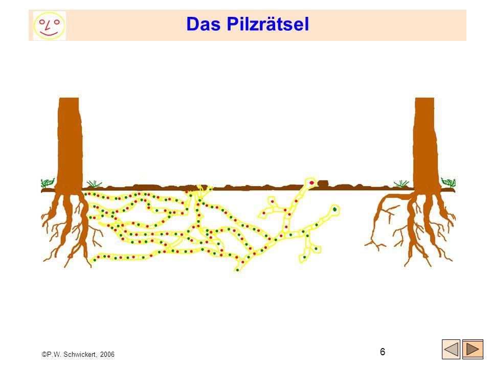 ©P.W. Schwickert, 2006 6 Das Pilzrätsel