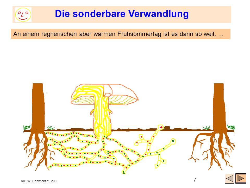 ©P.W. Schwickert, 2006 7 Die sonderbare Verwandlung An einem regnerischen aber warmen Frühsommertag ist es dann so weit....