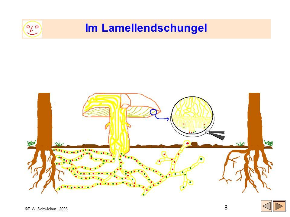 ©P.W. Schwickert, 2006 9 Für alle, die es genau wissen wollen