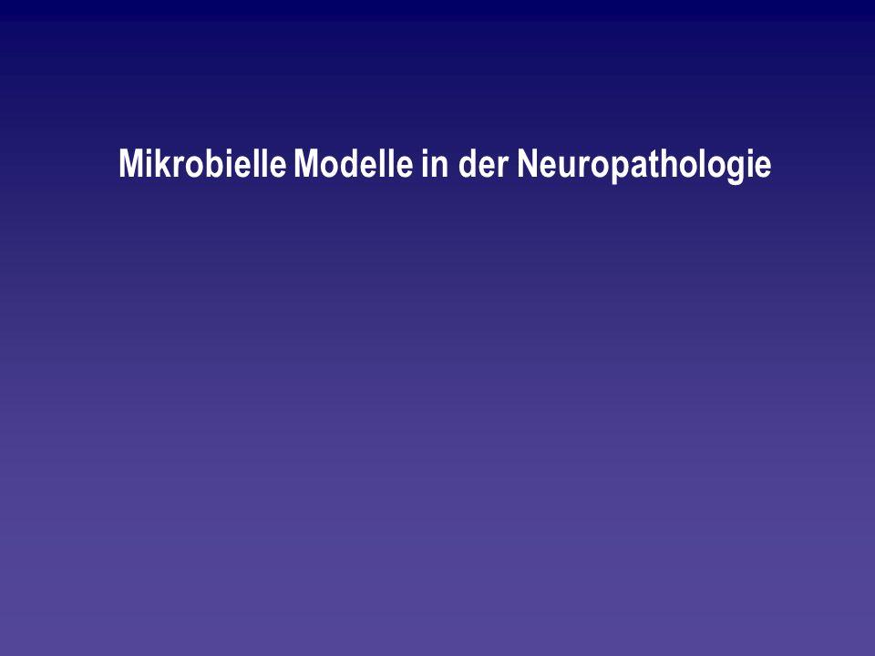 Mikrobielle Modelle in der Neuropathologie