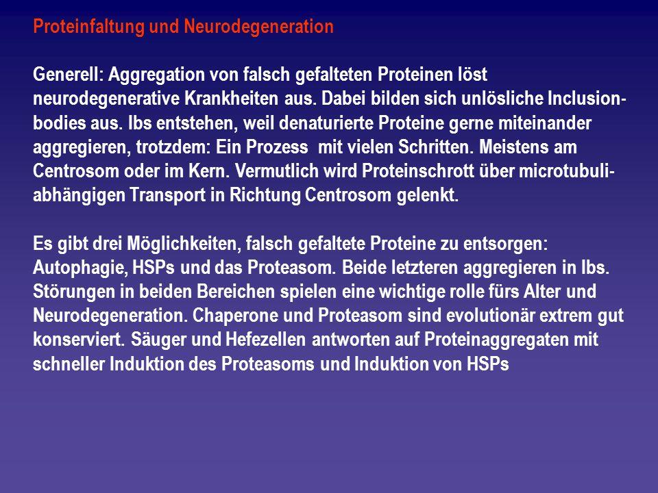 Proteinfaltung und Neurodegeneration Generell: Aggregation von falsch gefalteten Proteinen löst neurodegenerative Krankheiten aus. Dabei bilden sich u