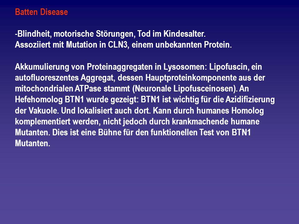 Batten Disease -Blindheit, motorische Störungen, Tod im Kindesalter. Assoziiert mit Mutation in CLN3, einem unbekannten Protein. Akkumulierung von Pro