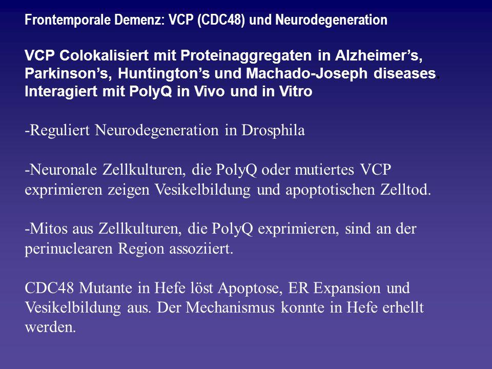 Frontemporale Demenz: VCP (CDC48) und Neurodegeneration VCP Colokalisiert mit Proteinaggregaten in Alzheimers, Parkinsons, Huntingtons und Machado-Jos
