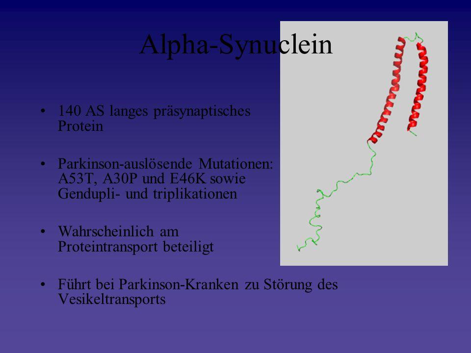 Alpha-Synuclein 140 AS langes präsynaptisches Protein Parkinson-auslösende Mutationen: A53T, A30P und E46K sowie Gendupli- und triplikationen Wahrsche