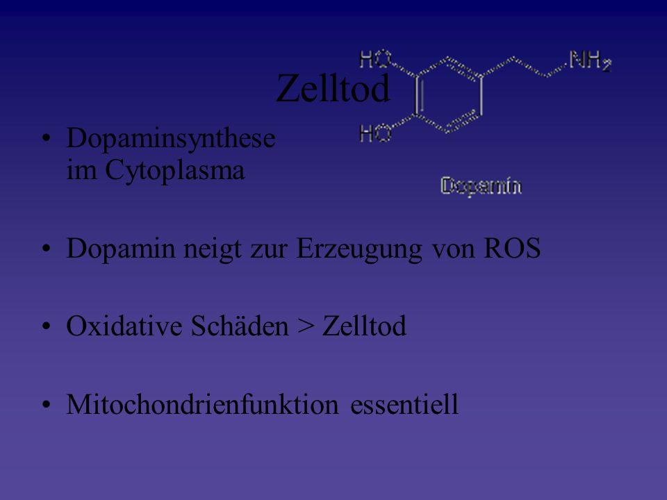 Zelltod Dopaminsynthese im Cytoplasma Dopamin neigt zur Erzeugung von ROS Oxidative Schäden > Zelltod Mitochondrienfunktion essentiell
