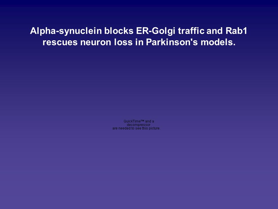 Alpha-synuclein blocks ER-Golgi traffic and Rab1 rescues neuron loss in Parkinson's models.