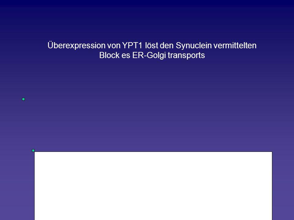 Überexpression von YPT1 löst den Synuclein vermittelten Block es ER-Golgi transports