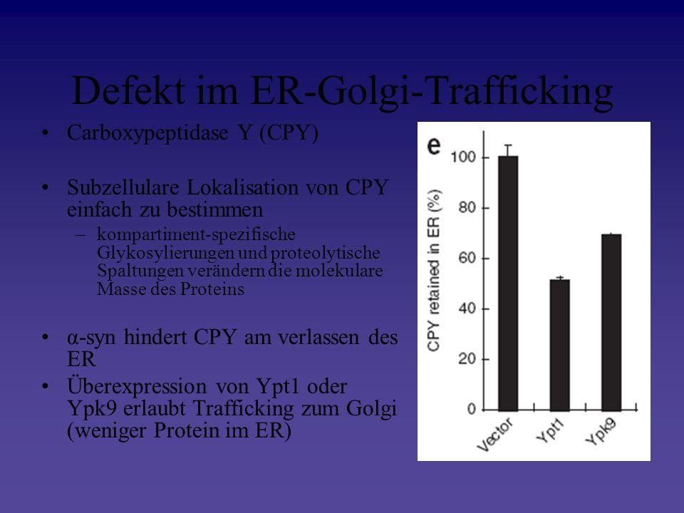 Defekt im ER-Golgi-Trafficking Carboxypeptidase Y (CPY) Subzellulare Lokalisation von CPY einfach zu bestimmen –kompartiment-spezifische Glykosylierun