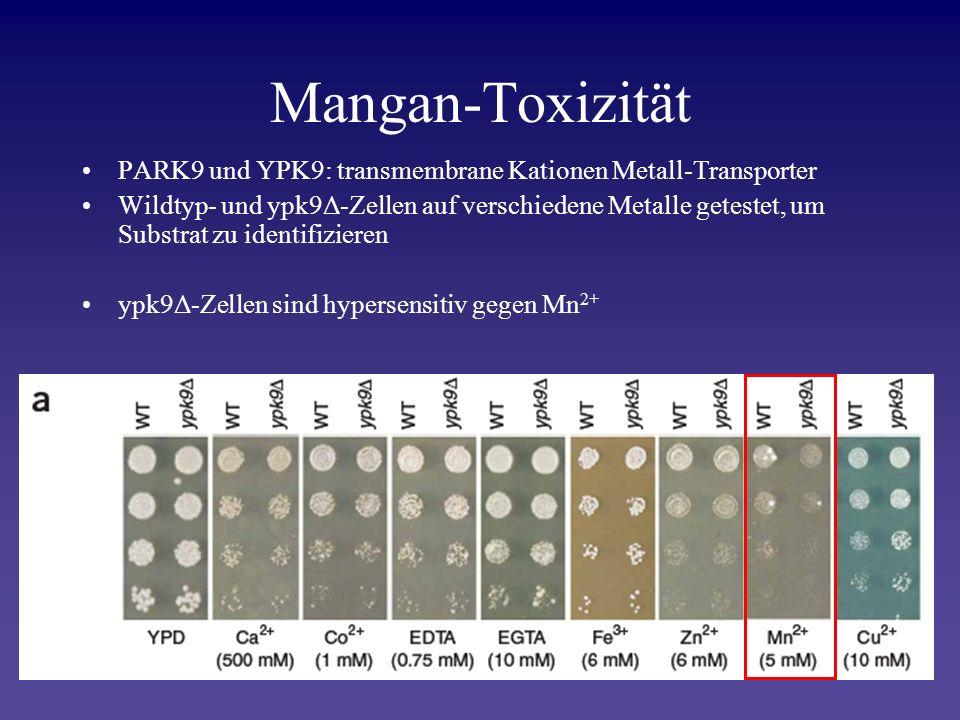 Mangan-Toxizität PARK9 und YPK9: transmembrane Kationen Metall-Transporter Wildtyp- und ypk9Δ-Zellen auf verschiedene Metalle getestet, um Substrat zu