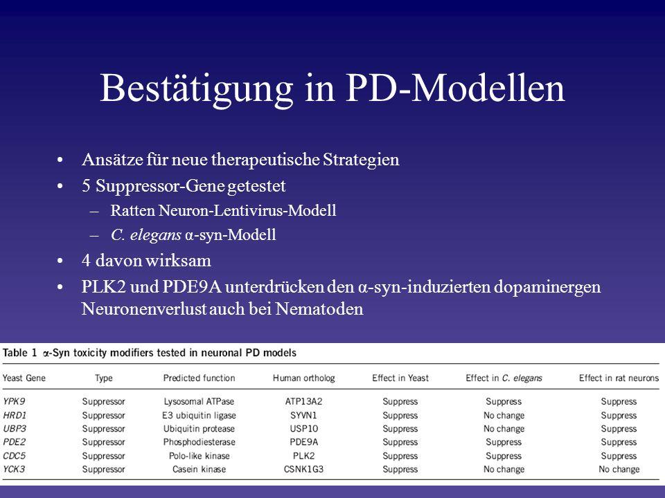 Bestätigung in PD-Modellen Ansätze für neue therapeutische Strategien 5 Suppressor-Gene getestet –Ratten Neuron-Lentivirus-Modell –C. elegans α-syn-Mo
