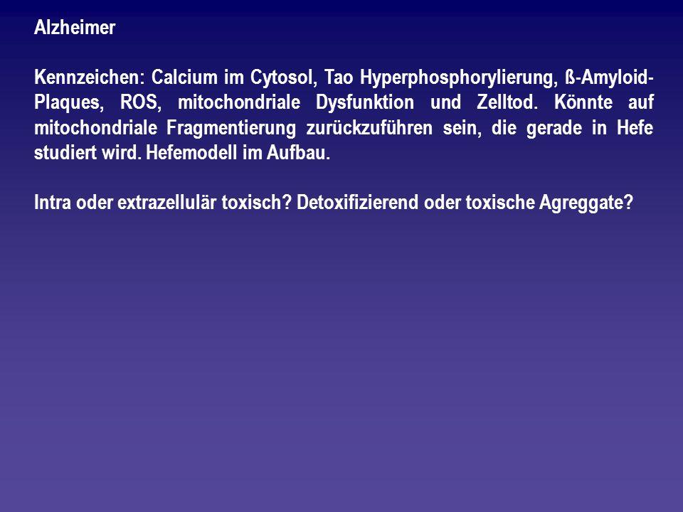 Alzheimer Kennzeichen: Calcium im Cytosol, Tao Hyperphosphorylierung, ß-Amyloid- Plaques, ROS, mitochondriale Dysfunktion und Zelltod. Könnte auf mito