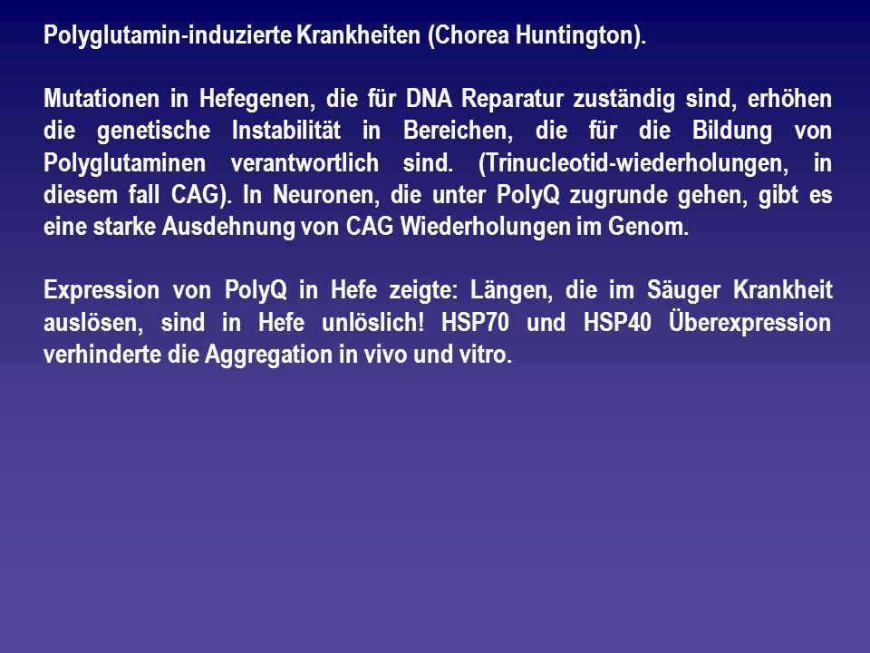 Polyglutamin-induzierte Krankheiten (Chorea Huntington). Mutationen in Hefegenen, die für DNA Reparatur zuständig sind, erhöhen die genetische Instabi