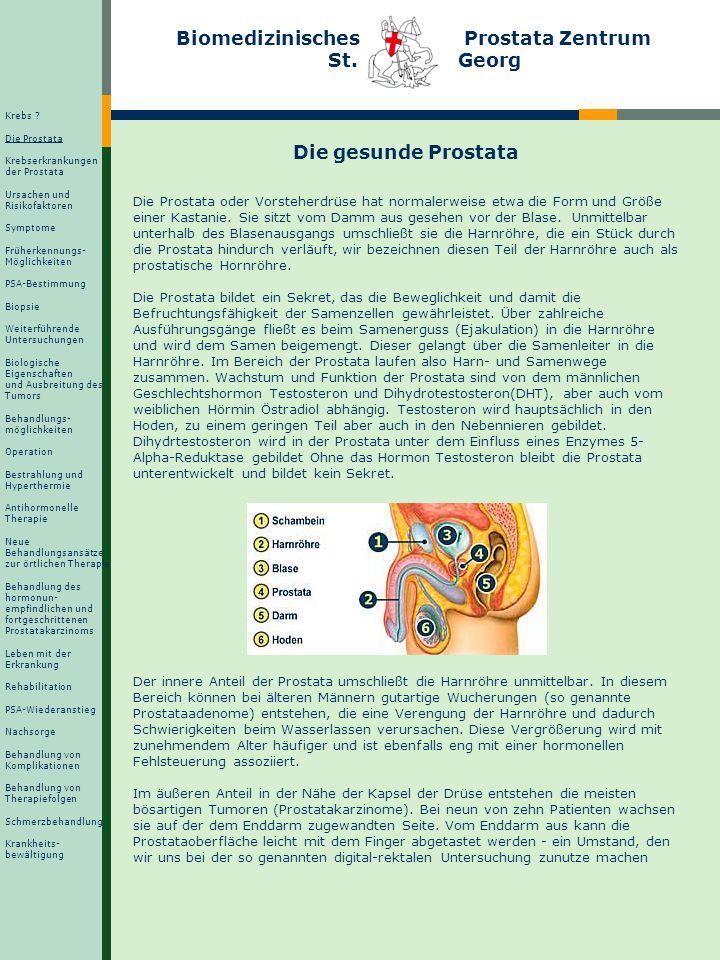 Biomedizinisches Prostata Zentrum St. Georg Die gesunde Prostata Die Prostata oder Vorsteherdrüse hat normalerweise etwa die Form und Größe einer Kast