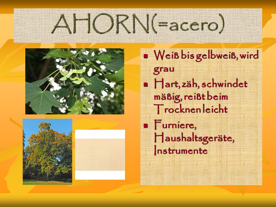 AHORN(=acero) Weiß bis gelbweiß, wird grau Weiß bis gelbweiß, wird grau Hart, zäh, schwindet mäßig, reißt beim Trocknen leicht Hart, zäh, schwindet mäßig, reißt beim Trocknen leicht Furniere, Haushaltsgeräte, Instrumente Furniere, Haushaltsgeräte, Instrumente