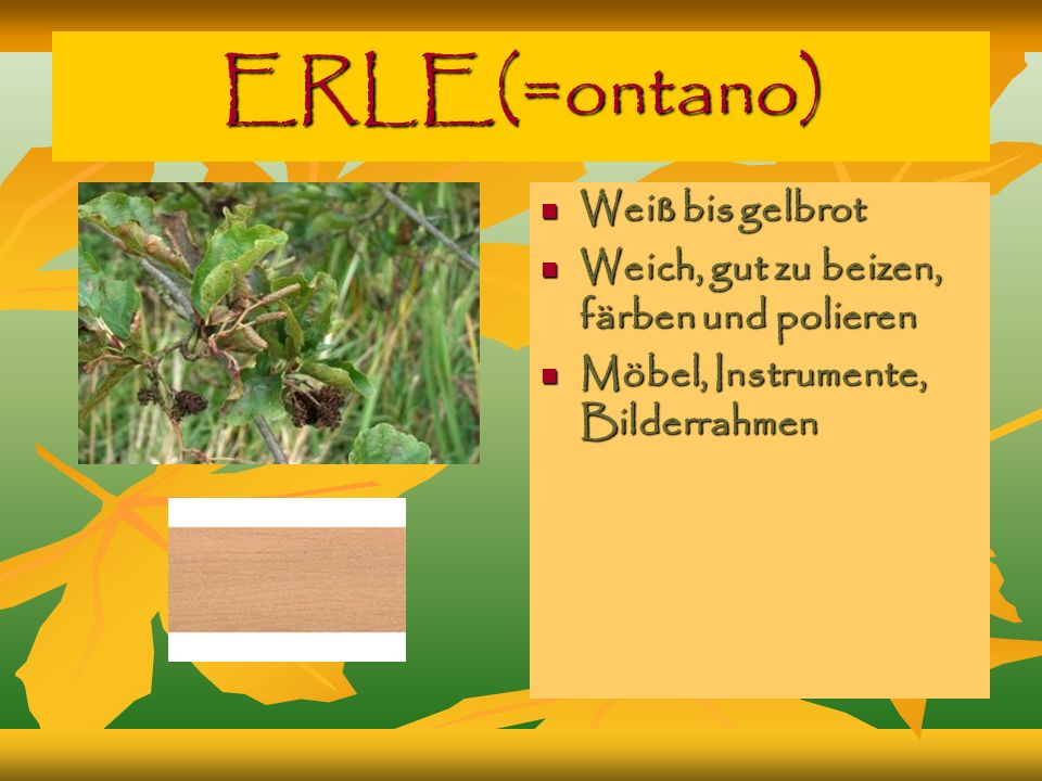 ERLE(=ontano) Weiß bis gelbrot Weiß bis gelbrot Weich, gut zu beizen, färben und polieren Weich, gut zu beizen, färben und polieren Möbel, Instrumente