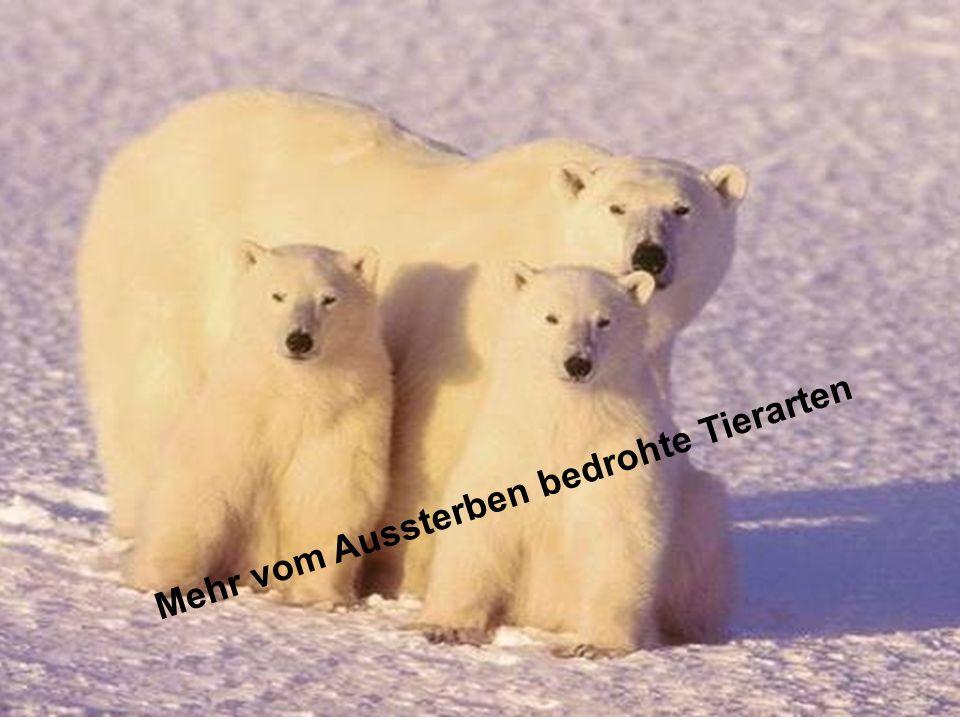 ÖFFENTLICHKEITSBETEILIGUNG www.transportlearning.net Mehr vom Aussterben bedrohte Tierarten